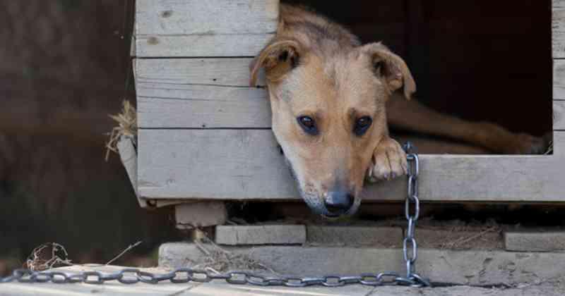 Lei que proíbe cachorros em corrente só espera assinatura de prefeito de Itajaí, SC