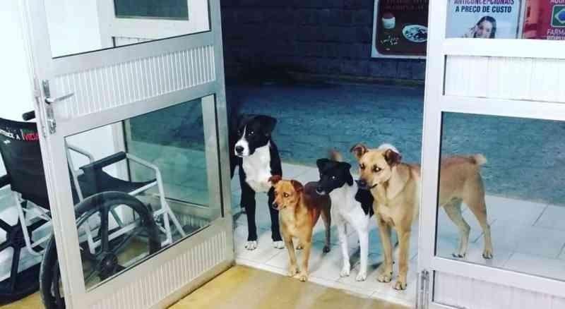 Cães aguardam morador de rua na porta de Hospital no Vale do Itajaí, em SC