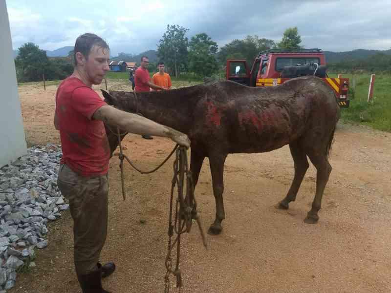 Égua que estava amarrada dentro de rio é resgatada após duas horas em SC