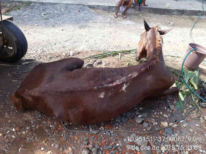 Flagra: cavalo é resgatado em condições de maus-tratos no Sergipe
