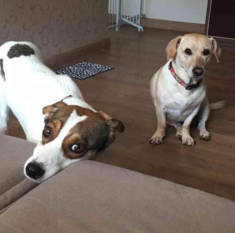 Cachorras são agredidas com bomba em condomínio de Araraquara, SP