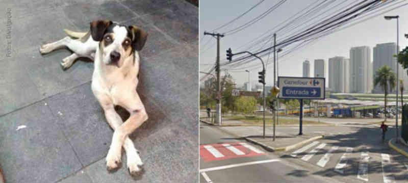 Campinas também terá protesto por morte de cachorro no Carrefour de Osasco, SP