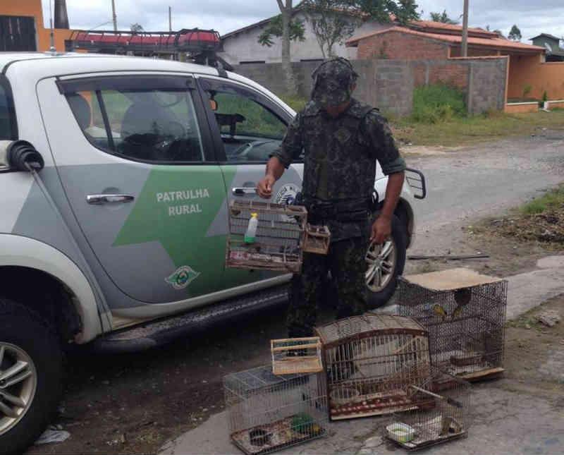 Homem é multado em mais de R$ 20 mil por manter aves em cativeiro em Iguape, SP