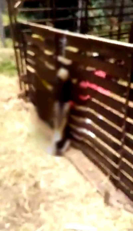 Cadela foi encontrada enforcada com a coleira em terreno de Itapetininga — Foto: Arquivo pessoal