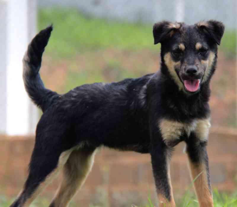 Centro de Controle de Zoonoses de Itaquaquecetuba (SP) tem mais de 100 animais para adoção