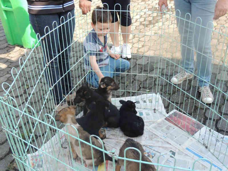 Centro de Controle de Zoonoses de Itaquaquecetuba (SP) tem animais para adoção
