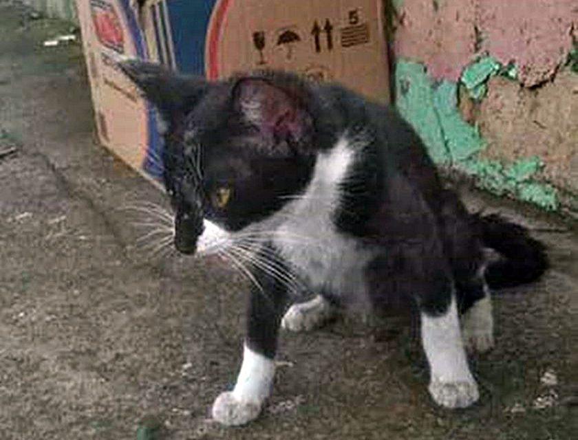 Morre gata que foi vítima de maus-tratos na vila São João em Itupeva, SP