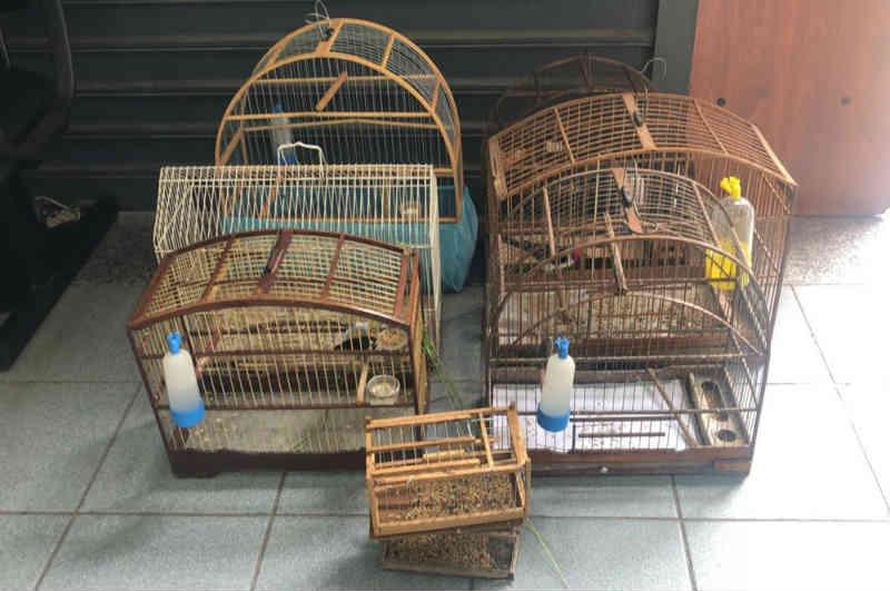 Pássaros silvestres são encontrados presos em gaiolas na Vila Marlene, em Jundiaí, SP