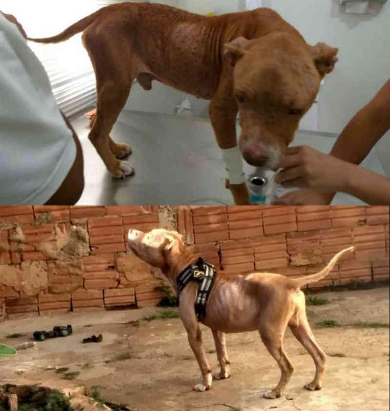 Cão resgatado pela polícia infestado de carrapatos ganha novo lar em Lins, SP