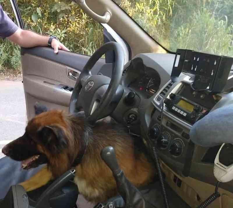Cão abandonado em estrada 'invade' viatura e comove policiais no interior de SP