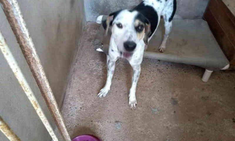 ONG Amparo Animal avisa que há quatro bem tratados cachorros para adoção, em Ji-Paraná, RO