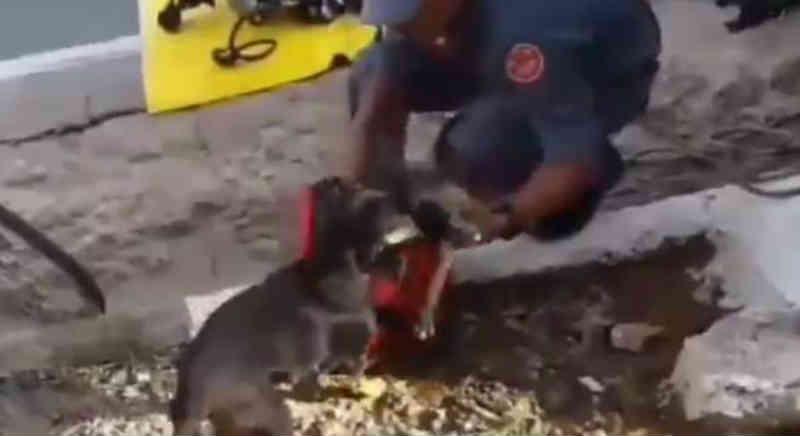 Vídeo mostra filhote de cachorro resgatado de bueiro em SP
