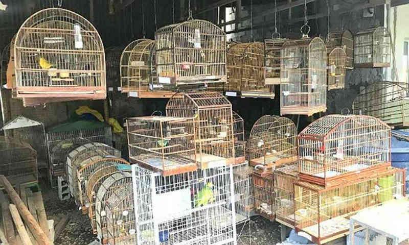 Guarda Ambiental prende 22 pessoas e resgata 1.300 pássaros vítimas de tráfico de aves em São Bernardo do Campo, SP