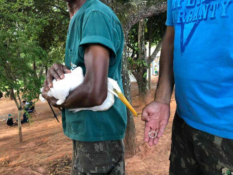 Garça que estava com lacre no bico é resgatada em Sorocaba, SP