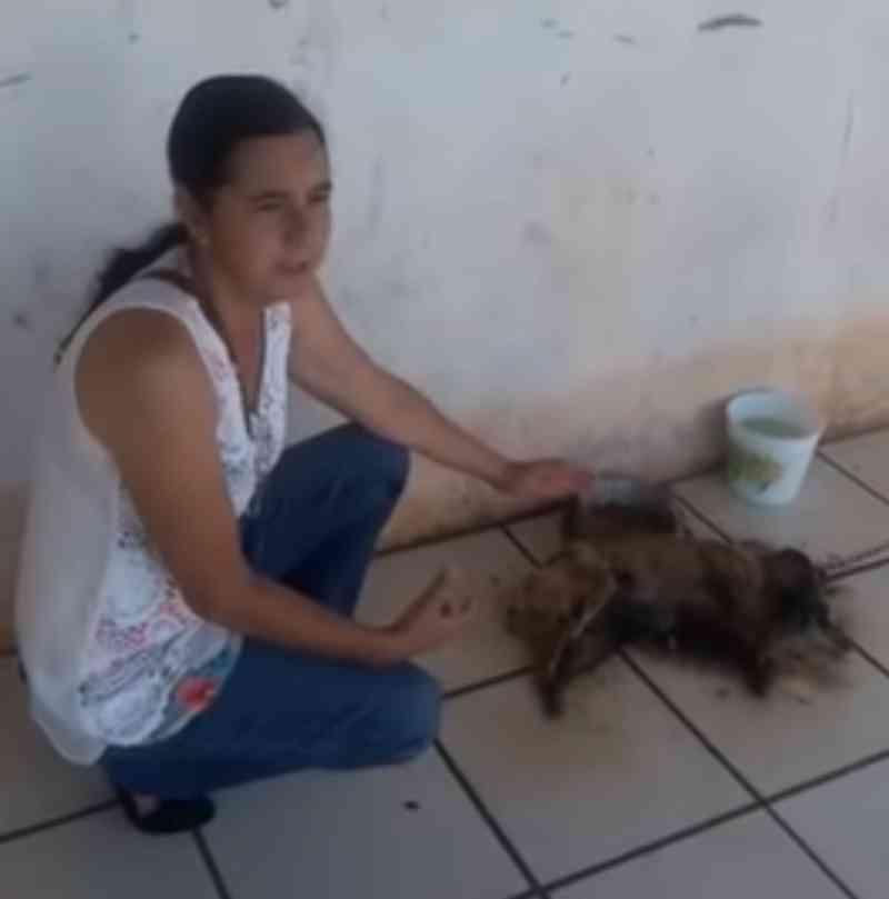 Cachorra morre após tutores viajarem e deixarem animal acorrentado em Assis, SP