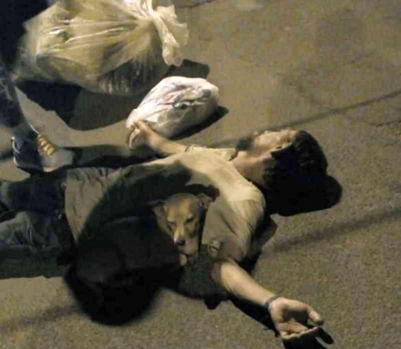 Cãozinho ficou o tempo todo ao lado de seu dono enquanto o catador de latinhas ficou desmaiado em rua da Vila Triângulo, em Assis — Foto: Thaís Brandão/Arquivo pessoal