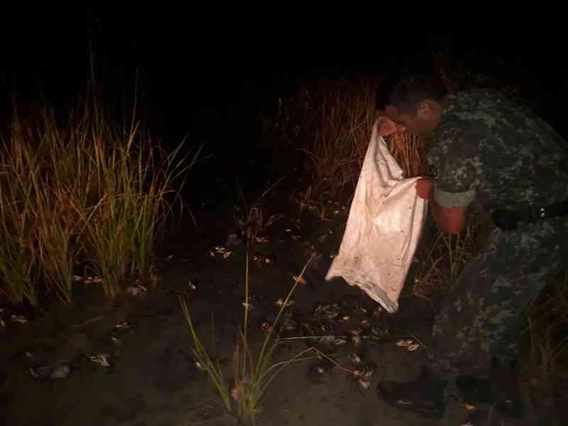 Polícia Ambiental identifica pesca ilegal de caranguejo-uçá e liberta mais de 350 animais em Cananeia, SP
