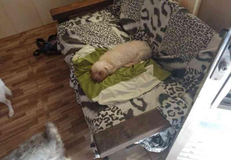 Animais abandonados estão sob os cuidados de Helena Bispo na Cota 200 — Foto: Ludmyla Juvenal