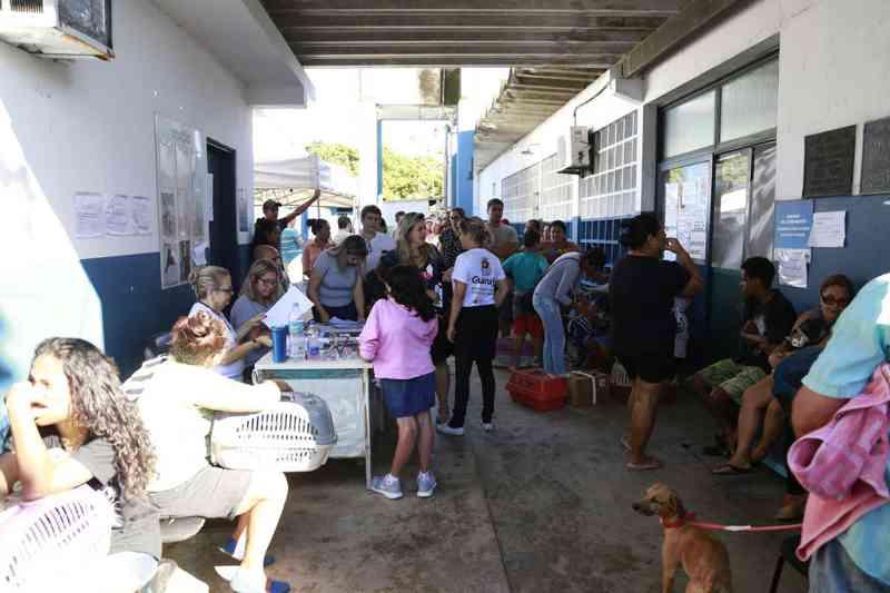 Os animais pertencem a moradores do bairro Cantagalo, na Enseada - Foto: Divulgação/PMG