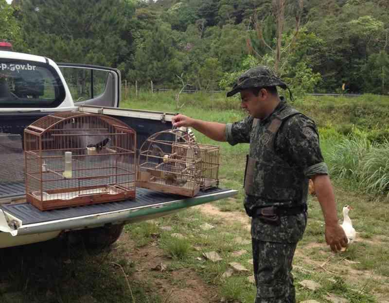 Fazendeiro é multado em R$ 33 mil por manter aves em cativeiro em Iguape, SP