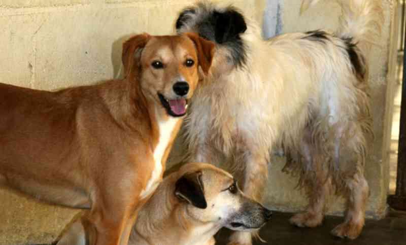MP vai à Justiça por recolhimento de animais abandonados em Jacareí, SP