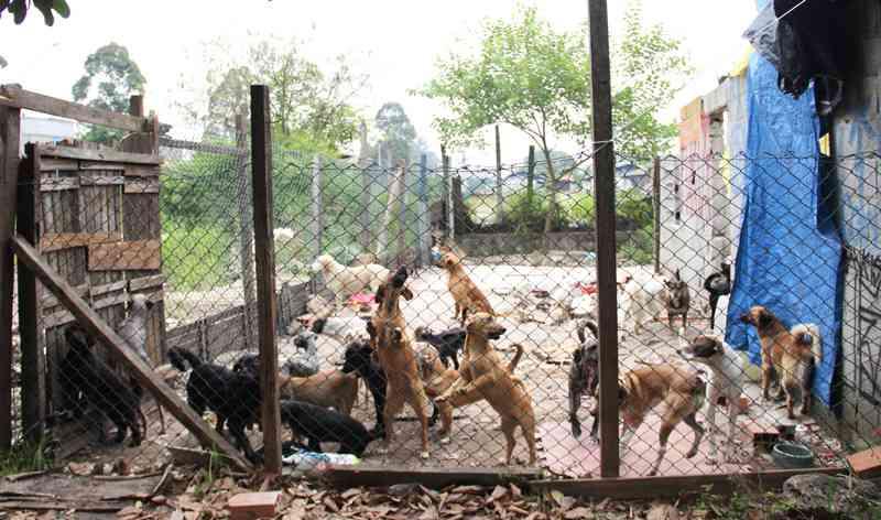 Com 40 animais de estimação, moradora de rua pede abrigo em Mauá, SP