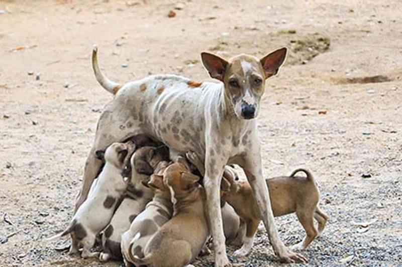 Osasco (SP) abre inscrição para 2,5 mil castrações animais