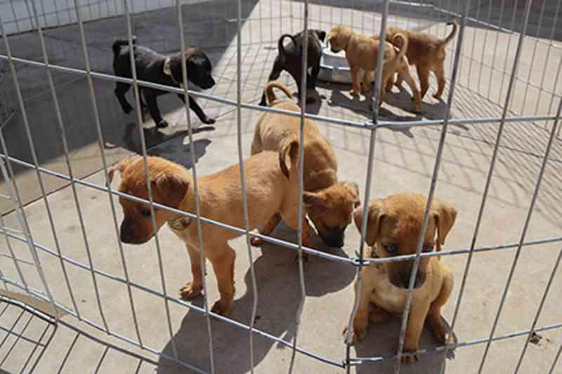 150 cães e 40 gatos estão à procura de um lar em Osasco, SP