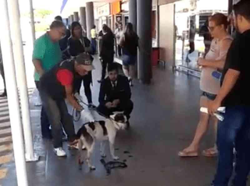 Vídeo mostra funcionário da Zoonoses recolhendo cão no Carrefour de Osasco (SP) e Prefeitura rebate nota da empresa