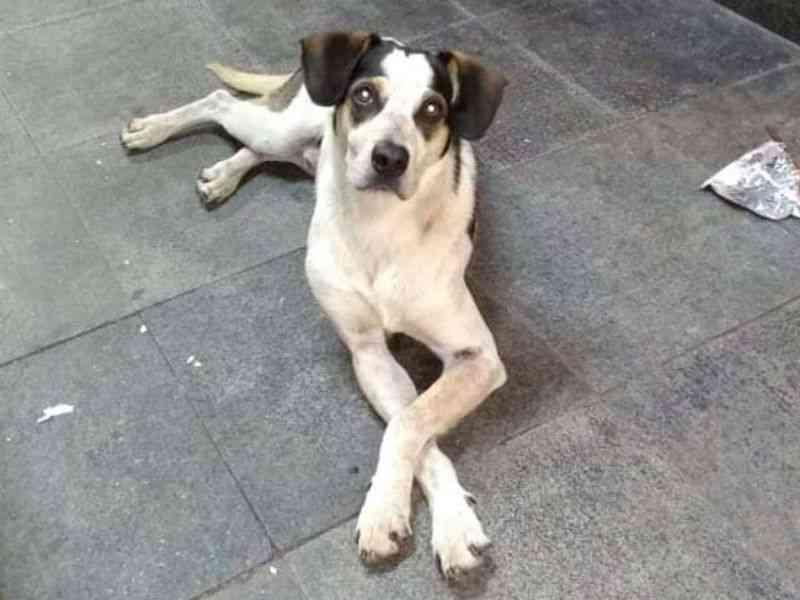2 milhões já assinaram petição por cão morto no Carrefour; 'Quero justiça', diz autora