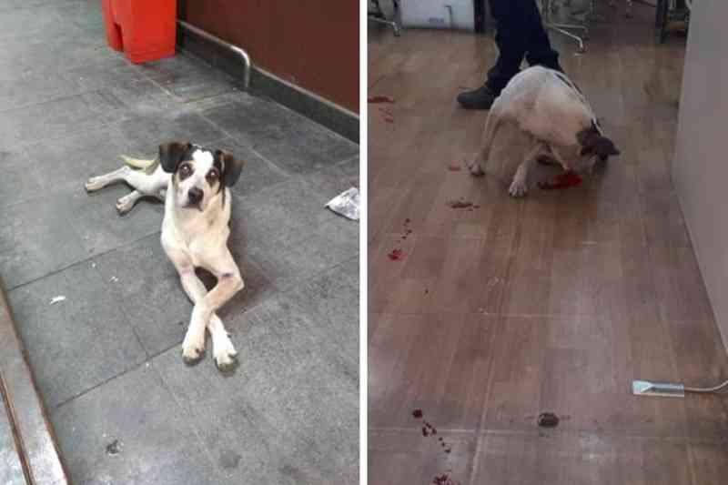 Carrefour dá nova versão à morte de cachorro de unidade de Osasco, SP
