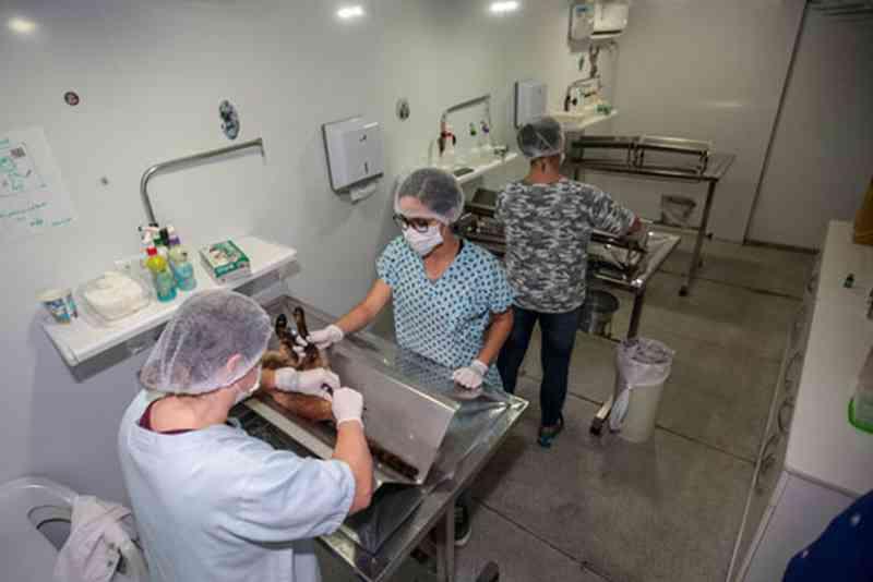 Praia Grande (SP) abre lista para agendar castração de cães e gatos