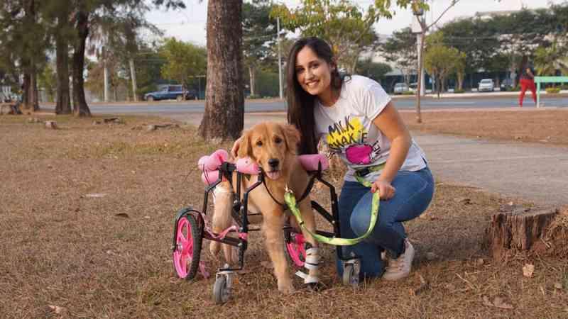 Projeto arrecada fundos para ajudar cães doentes e especiais que precisam de tratamento