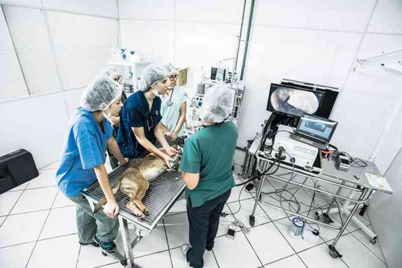 Hospital veterinário gratuito da zona oeste de São Paulo passa a cobrar por atendimento