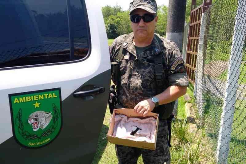Agentes da Guarda ambiental de São Vicente (SP) resgatam três aves