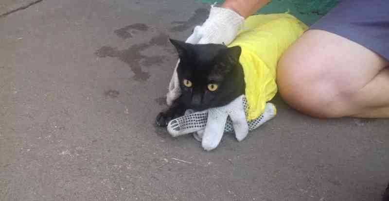 Gato é atropelado e acaba morrendo no canil municipal de São Carlos, SP