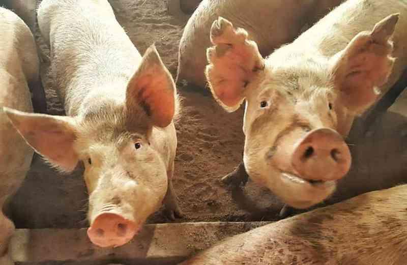 Santuário Terra dos Bichos pede doações urgentes para manutenção de recinto com mais de 400 animais