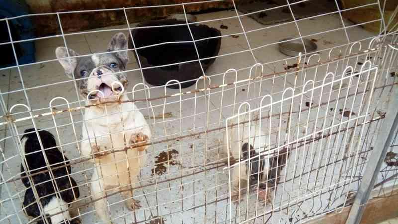 Polícia fecha canil clandestino e resgata 143 cães no litoral de SP