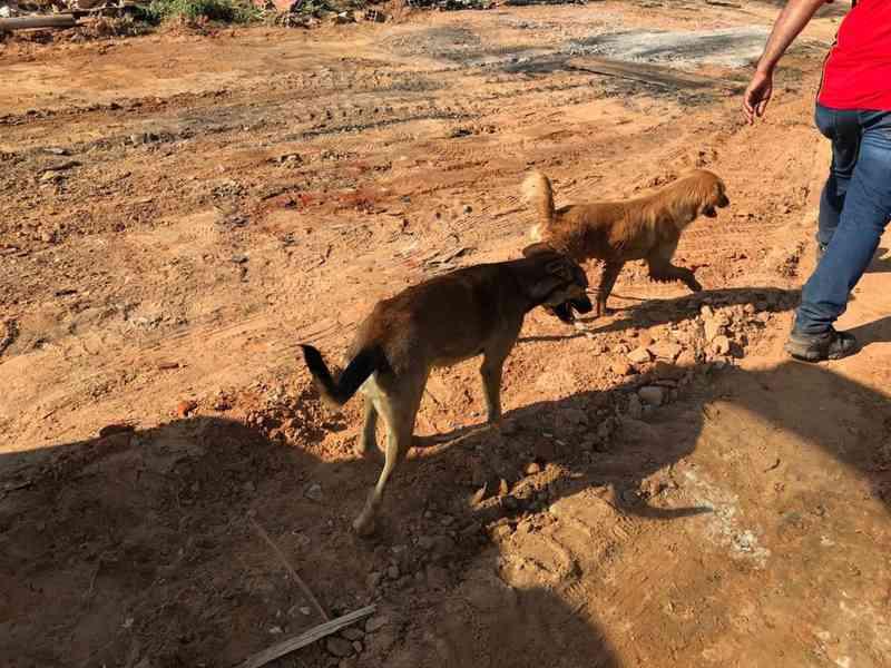 Grupo cuida de cães abandonados em área desocupada após reintegração de posse em Sorocaba, SP