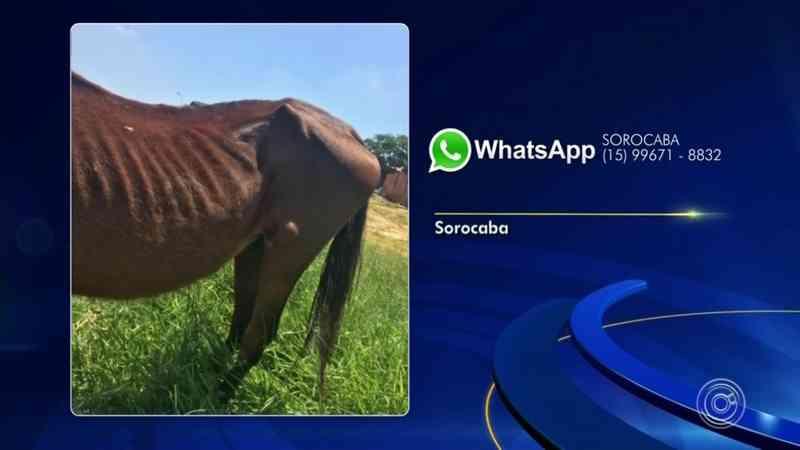 Moradores flagram cavalo abandonado debaixo do sol em Sorocaba, SP