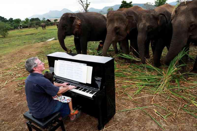 O homem que toca piano para elefantes vítimas de maus-tratos; vídeo