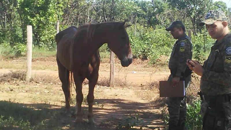 GMP auxilia no resgate de cavalo vítima de maus-tratos localizado próximo a Praia dos Buritis, em Palmas, TO