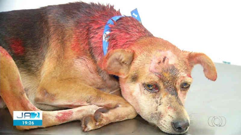 Homem que deu marretadas na cabeça de cadela diz que agressão foi em 'momento de raiva'