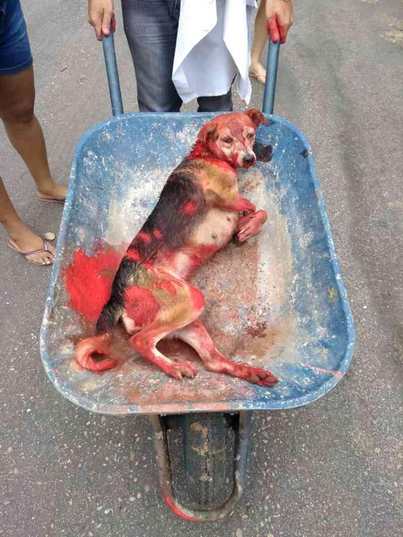 Cadela de rua agredida com marretadas na cabeça é pintada de vermelho para disfarçar sangramento