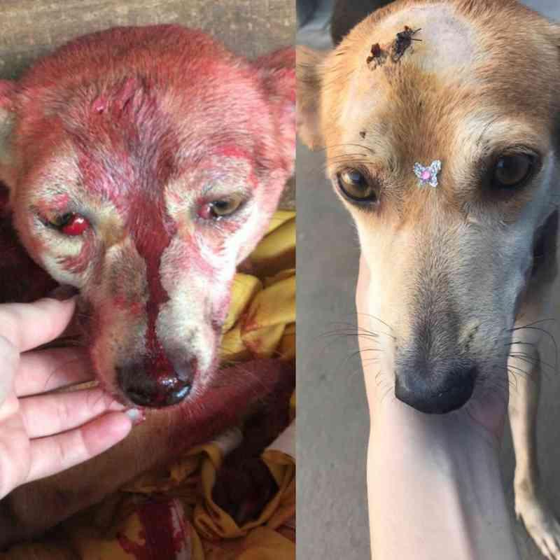 Cadela agredida com marretadas na cabeça recebe alta e ganha novo lar