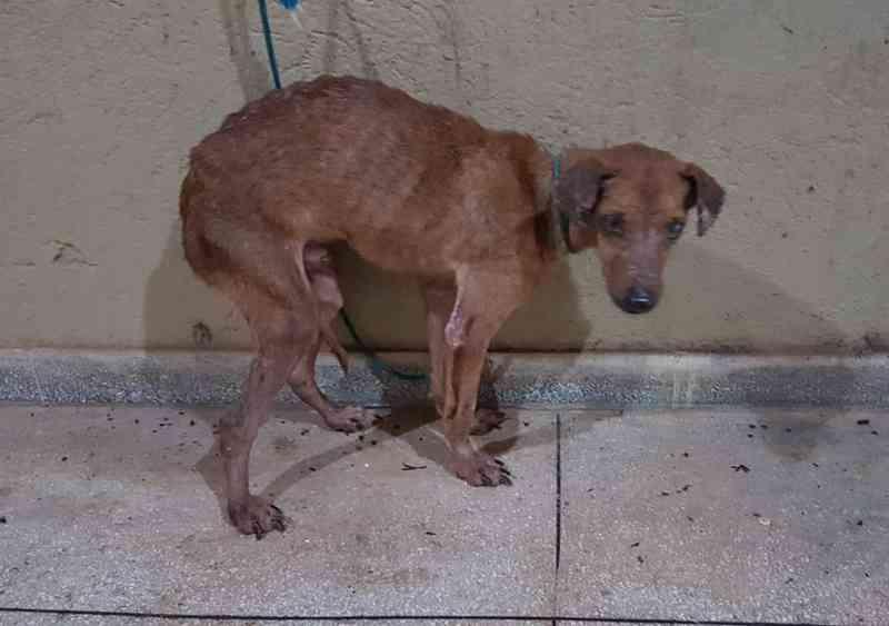 Cachorro foi abandonado em casa após mudança — Foto: Divulgação