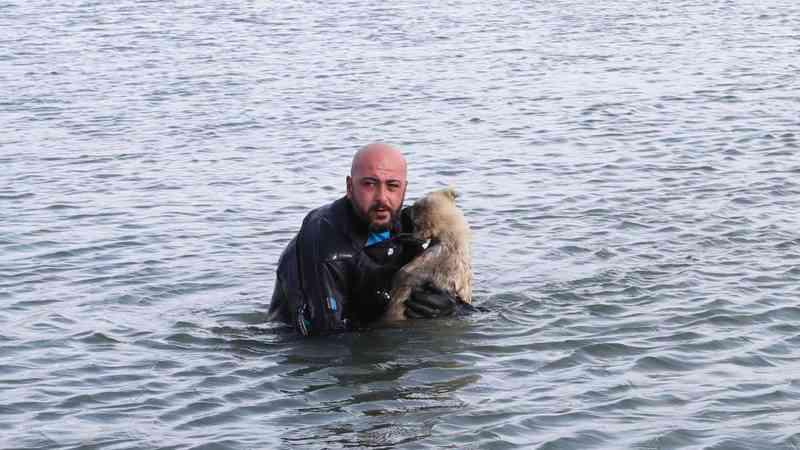 Polícia turco atravessou águas geladas para salvar cachorro