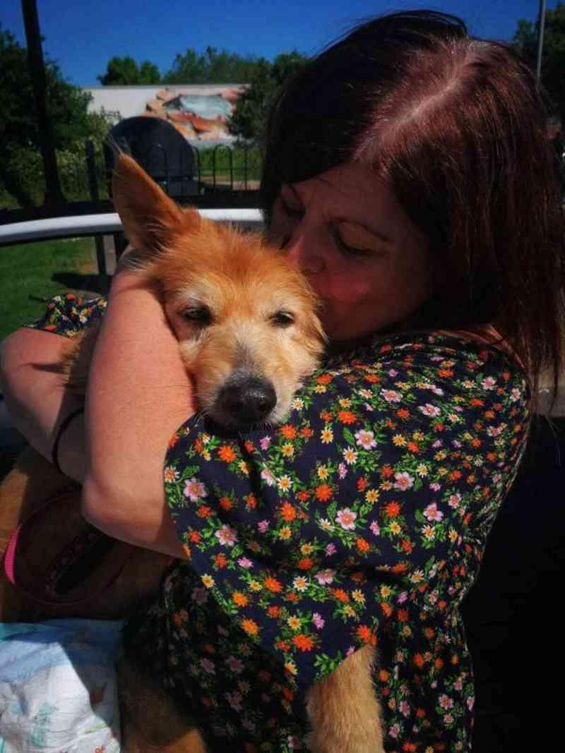 Mulher salva cão violado durante cinco anos