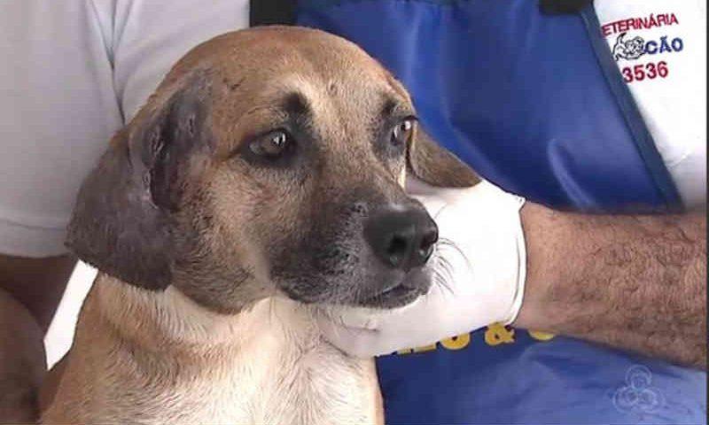 ONGS que resgatam animais abandonados em Rio Branco (AC) relatam dificuldades para se manter