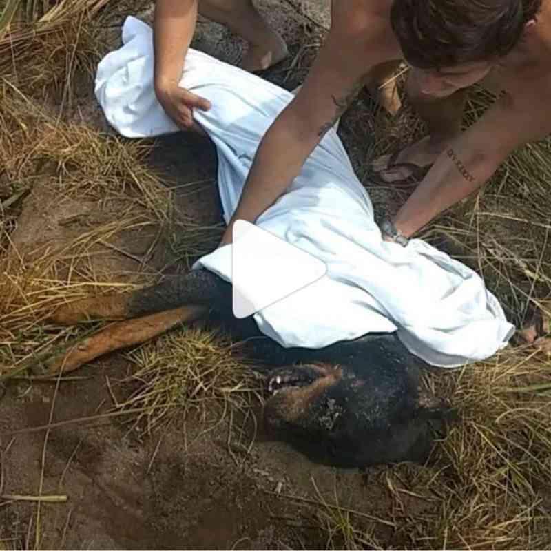Cão é resgatado após ser enterrado vivo na Barra de São Miguel, AL